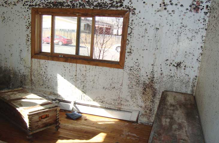 delta denver mold on walls